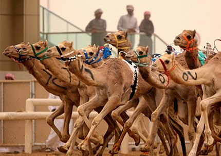 Camel Race Track Tour