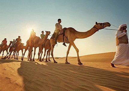 Camel Trekking Tour Abu Dhabi