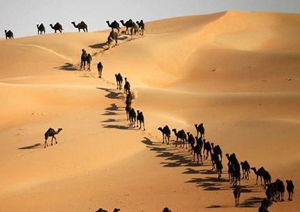 Private Liwa Full Day Safari