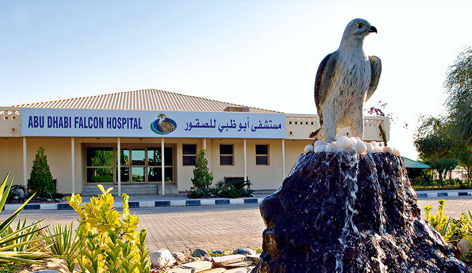 Abu Dhabi Falcon Hospital Tour - Desert Rose Tourism, Abu