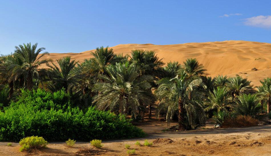 Liwa Desert Safari - Full Day